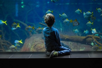 Child watching fishes at SEA Life Berlin