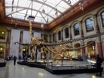 Dinosaur skeletons at Berlin's Museum of Natural History